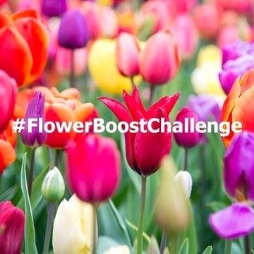 #FlowerBoostChallenge